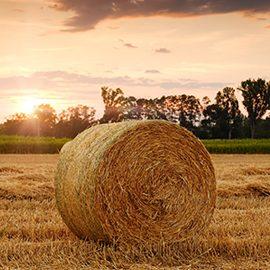 Rural & Agribusiness